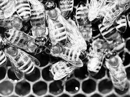 Mierea de albine, un pic cam prea scumpă