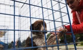 Deocamdată doar 24 de maidanezi salvaţi prin adopţie