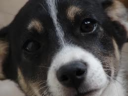 Apel la botoşăneni: Ador strânge hrană pentru câinii din padocul public