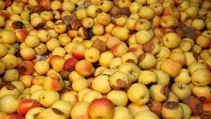 """Five Continents are o """"felie"""" mare din merele de 1,14 milioane de lei"""
