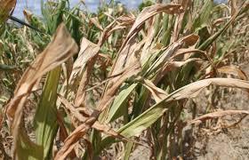 AVIZ fermierilor: Se pot cere despăgubiri până pe 30 noiembrie