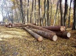 Se fac controale la tăierile din păduri