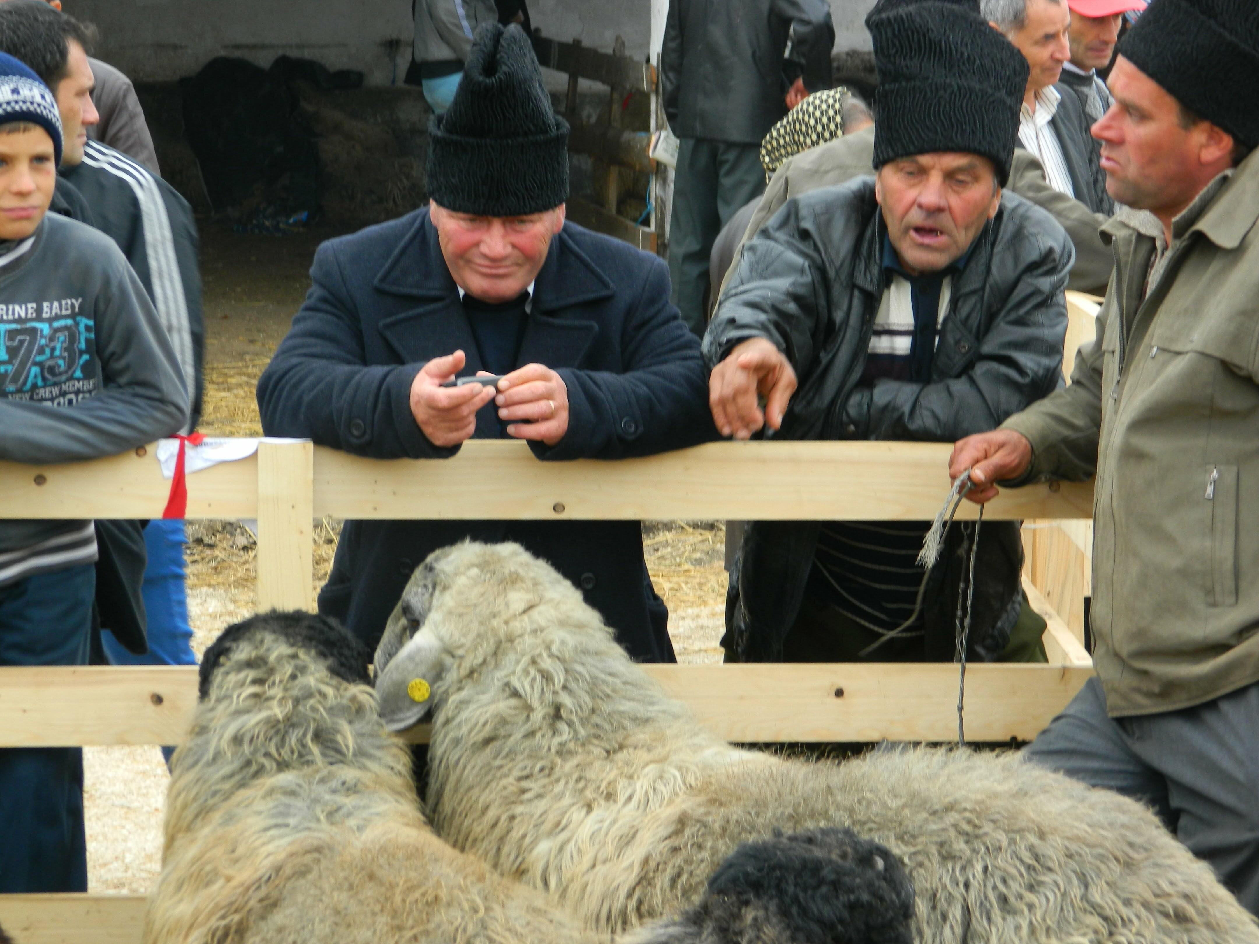 Producători agricoli şi meşteşugari la a XI-a ediţie a Târgului Agro–Zoo la Staţiunea Popăuţi