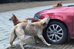 EVENIMENTAutoturism atacat de un câine agresiv de talie mare