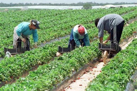 SOCIALSute de locuri de muncă în domeniul agricol, în Portugalia