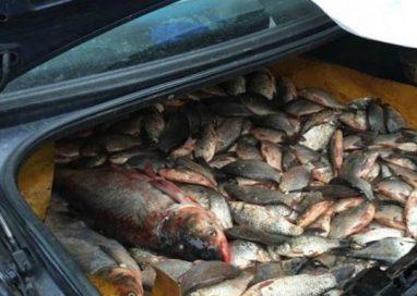 EVENIMENTDosar penal pentru un transport de peşte fără documente legale