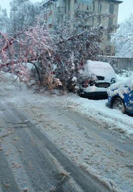 EVENIMENTMaşini avariate de mai mulți copaci doborâţi de zăpadă