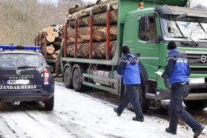 EVENIMENTJandarmii au participat la 77 de acţiuni pentru prevenirea şi combaterea tăierilor ilegale de material lemnos  –  VIDEO