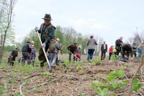 ADMINISTRATIEAproximativ 50 de angajați din administrația botoșăneană au participat astăzi la o acțiune de plantare de puieți de stejar şi cireş – VIDEO/GALERIE FOTO